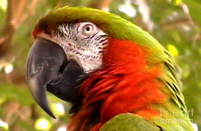 Macaw Alert Art Print by John From CNY
