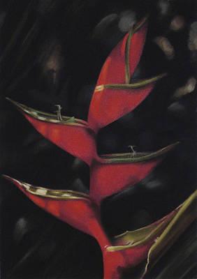 Pastel - Macaw Flower - Heliconia Bihai by Ben Kotyuk