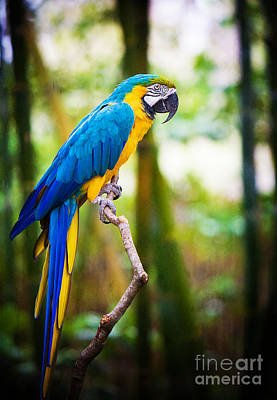 Animals Photos - Macaw by Joan McCool