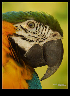 Arras Photograph - Macaw by Leito R