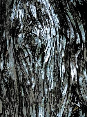 Photograph - Mackinac Island Bark by Beth Akerman