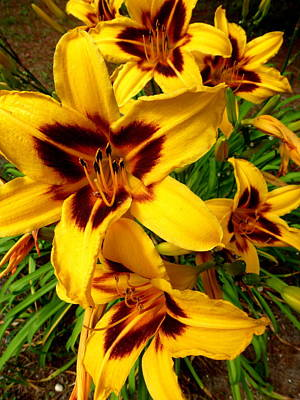 Photograph - Mackinac Island Lilies by Beth Akerman