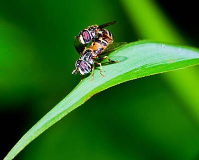 Photograph - Macro Bees Mating by Chua  ChinLeng