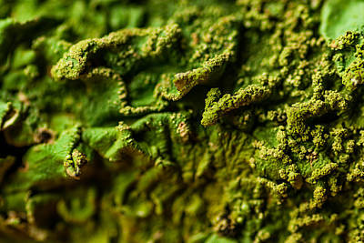 Photograph - Macro Fungi by Gene Hilton
