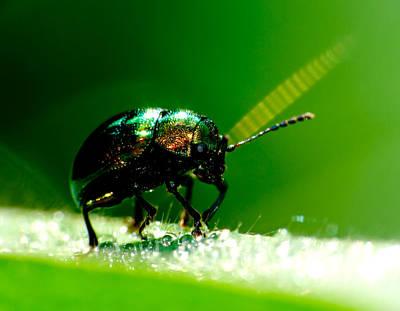 Photograph - Macro Green Beetle by Chua  ChinLeng