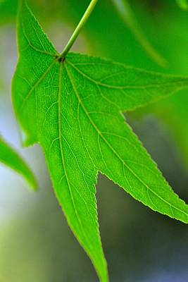 Photograph - Macro Leaf by Shannon Harrington