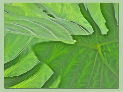 Photograph - Macro Leaf Structure by Debra     Vatalaro