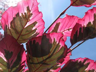 Macro Leaves Print by Sean Seal