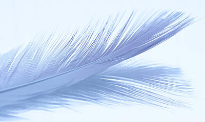 Photograph - Macro Photograph Of A Feather And It's Reflection. by Zoe Ferrie