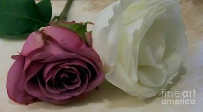 Macro Roses Original