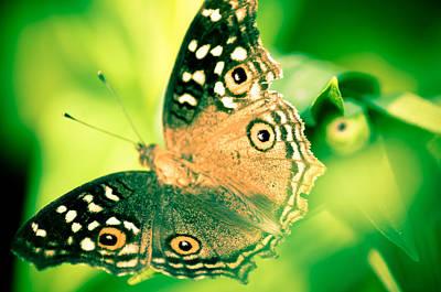 Kornrawiee Photograph - Madam Butterfly by Kornrawiee Miu Miu