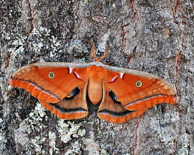 Madam Moth Art Print by Al Powell Photography USA