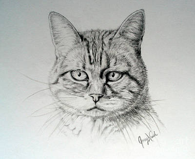 House Cats Drawing - Madelaine by Joey Nash