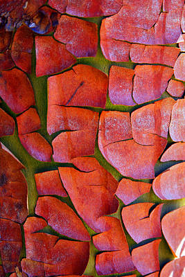 Photograph - Madrone by Marie Jamieson