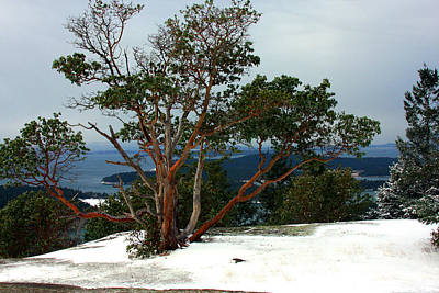 Photograph - Madrone On Young Hill by Marie Jamieson