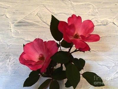 Magenta Roses Art Print by Marsha Heiken