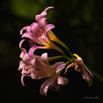 Magic Lily Appears Art Print