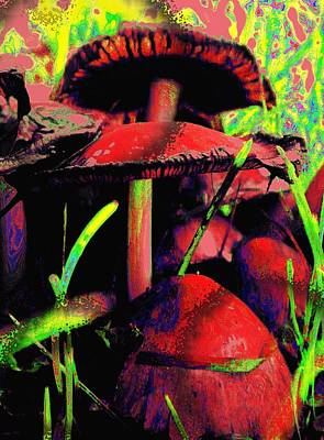 Photograph - Magic Mushrooms by Renate Nadi Wesley