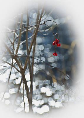Vines Photograph - Magic Of Winter Berries by LeeAnn McLaneGoetz McLaneGoetzStudioLLCcom