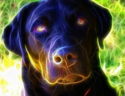 Chocolate Lab Drawing - Magical Black Lab by Paul Van Scott