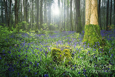 Photograph - Magical Bluebell Forest In Kildare Ireland by Catherine MacBride