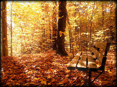 Magical Sunbeams On The Best Seat In The Forest Art Print by Chantal PhotoPix