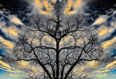 Lightscapes Photograph - Magical Tree by Hakon Soreide