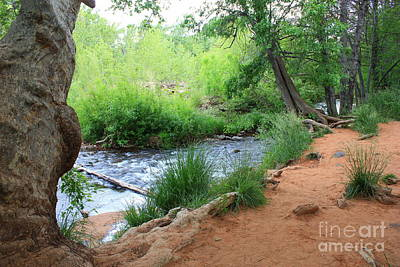 Photograph - Magical Trees At Red Rock Crossing by Carol Groenen