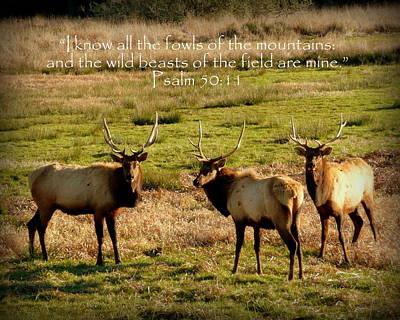 Magnificent Bull Elk Psalm 50 Art Print by Cindy Wright