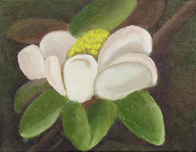 Magnificient Magnolia Art Print by Margaret Harmon