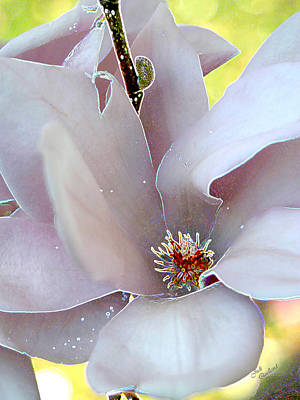 Photograph - Magnolia Blossom by Judi Quelland
