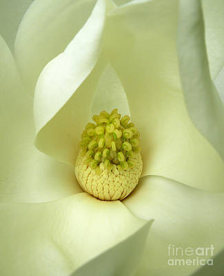 Photograph - Magnolia Grandiflora by Deborah Smith