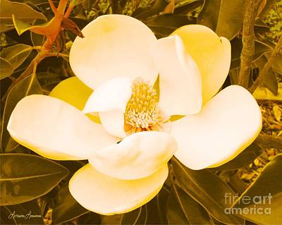 Magnolia In Color Art Print by Lorraine Louwerse