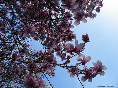 Ebsq Digital Photograph - Magnolia In The Sky by Kimmary MacLean