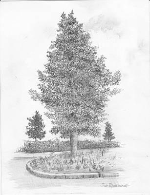 Magnolia Tree Drawings  Fine Art America
