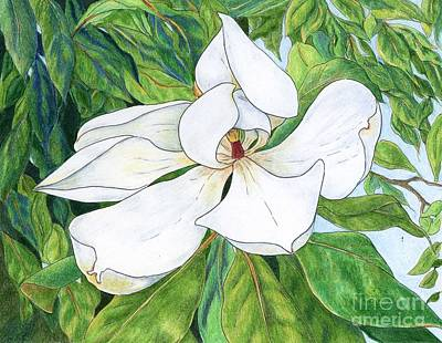 Magnolia Art Print by Linda Battles
