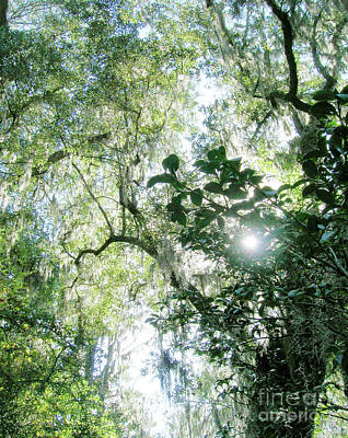 Digital Art - Magnolia Plantation Sc by Lizi Beard-Ward