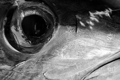 Photograph - Maguro II by Dean Harte