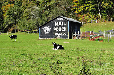 Mail Pouch Barn Photograph - Mail Pouch Barn And Holsteins by Thomas R Fletcher