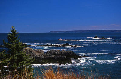 Maine At West Quoddy Art Print by Skip Willits