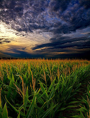 Maize Print by Phil Koch