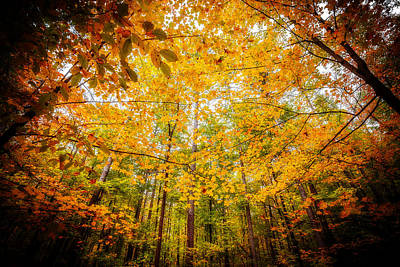 Photograph - Majestic Autumn by Anthony Rego