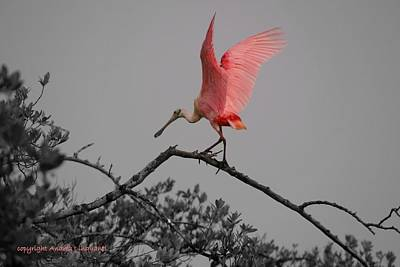 Photograph - Majestic Beauty by Andrea Linquanti