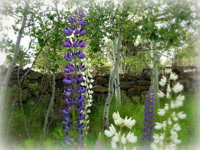 Photograph - Majestic Delphinium And Quaking Aspen by Cindy Wright