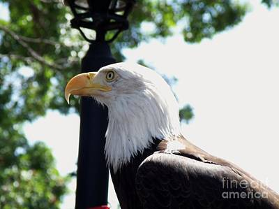 Preditory Photograph - Majestic by Donna Parlow