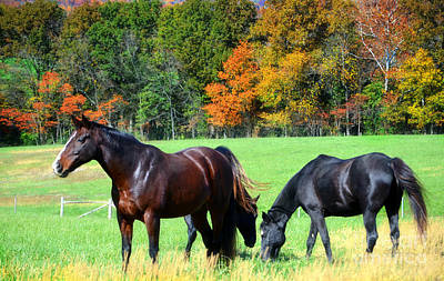 Autumn Peggy Franz Photograph - Majestic Horses by Peggy Franz