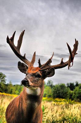 Bucks In Velvet Photograph - Majestic In Velvet by Emily Stauring