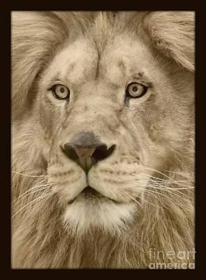 Majestic Lion Art Print by Megan Wilson