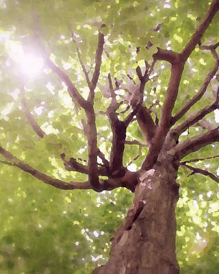 Art Print featuring the photograph Majestic Maple by Brooke T Ryan