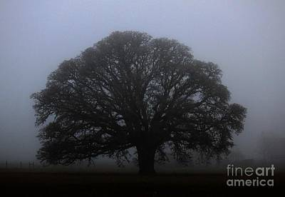 Photograph - Majestic Oak by Erica Hanel